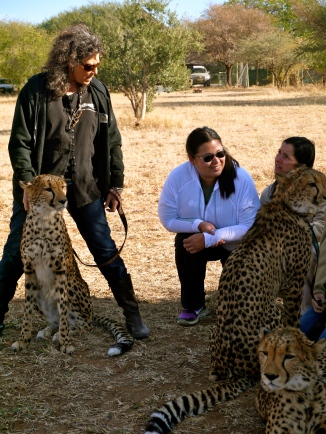 Meeting Tiger Lily, an Ambassador Cheetah